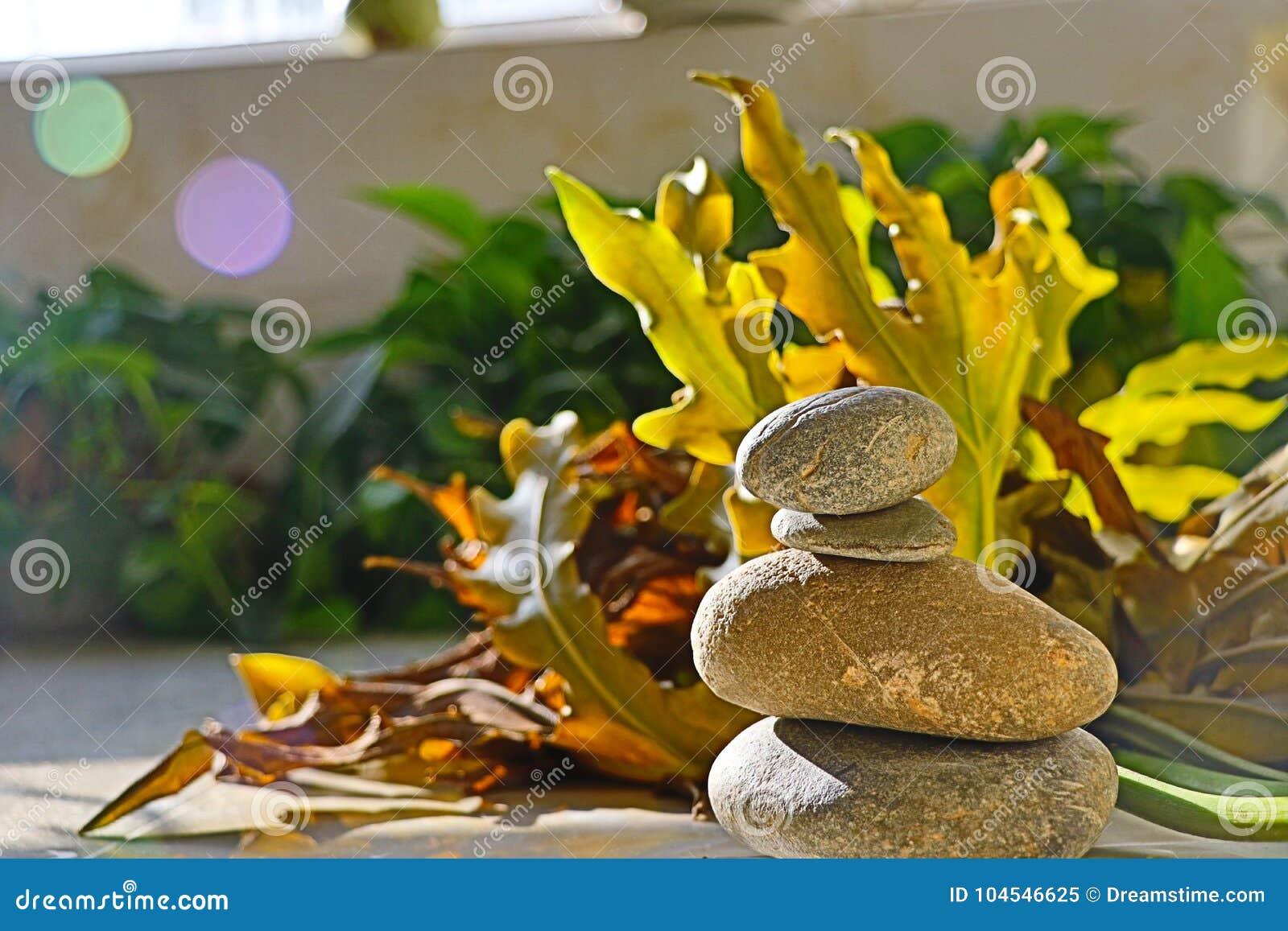 Φύλλα και πέτρες
