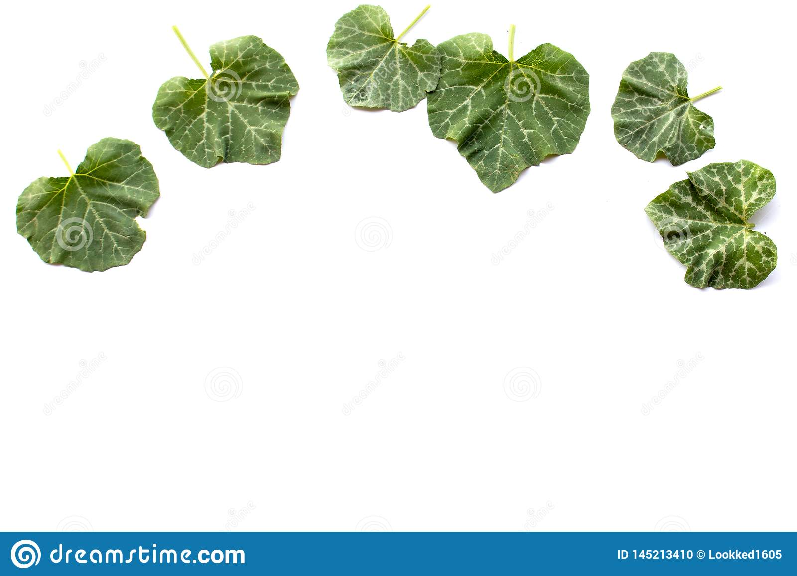Φύλλα κολοκύθας στο λευκό