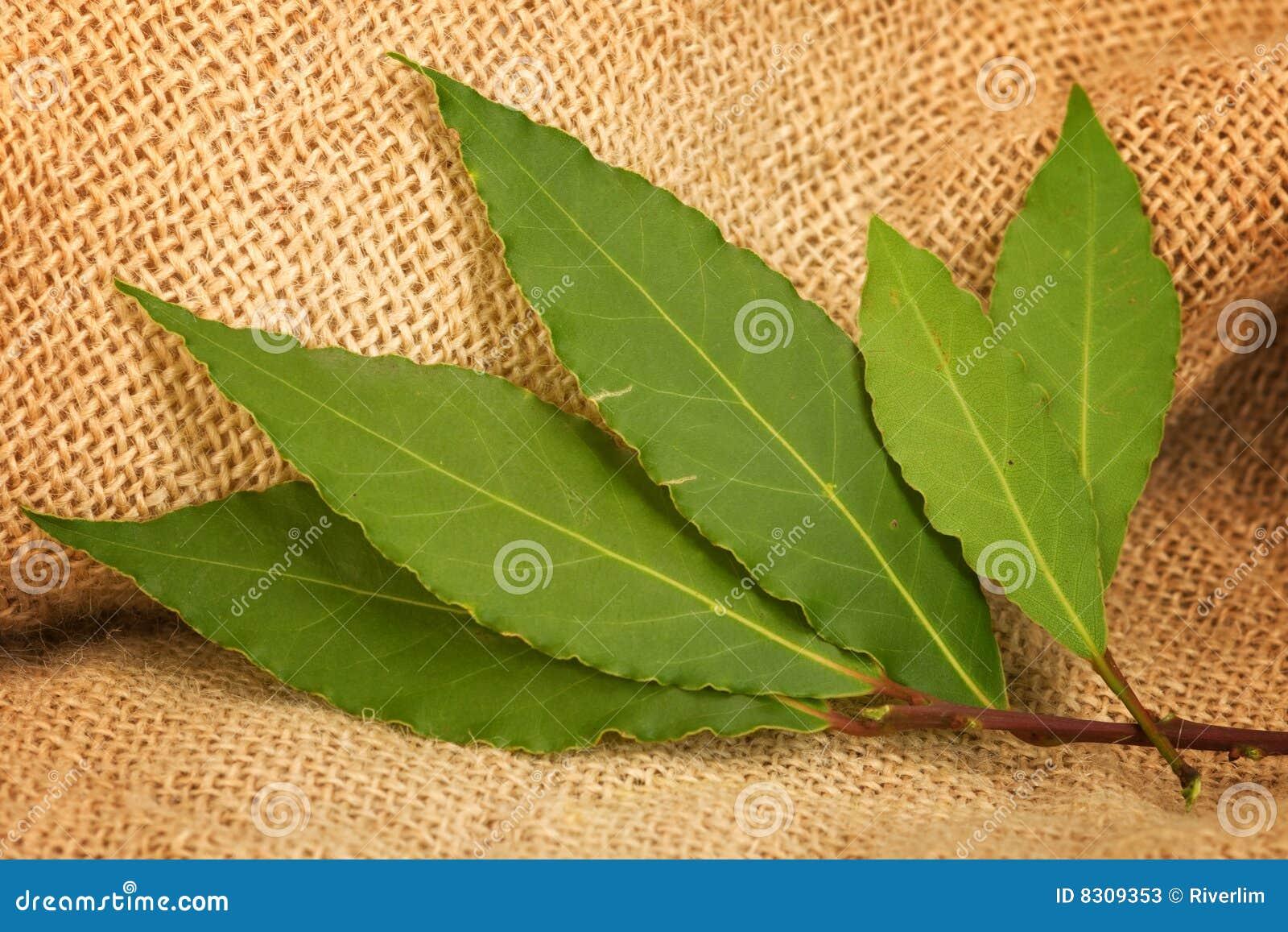 φύλλα κόλπων