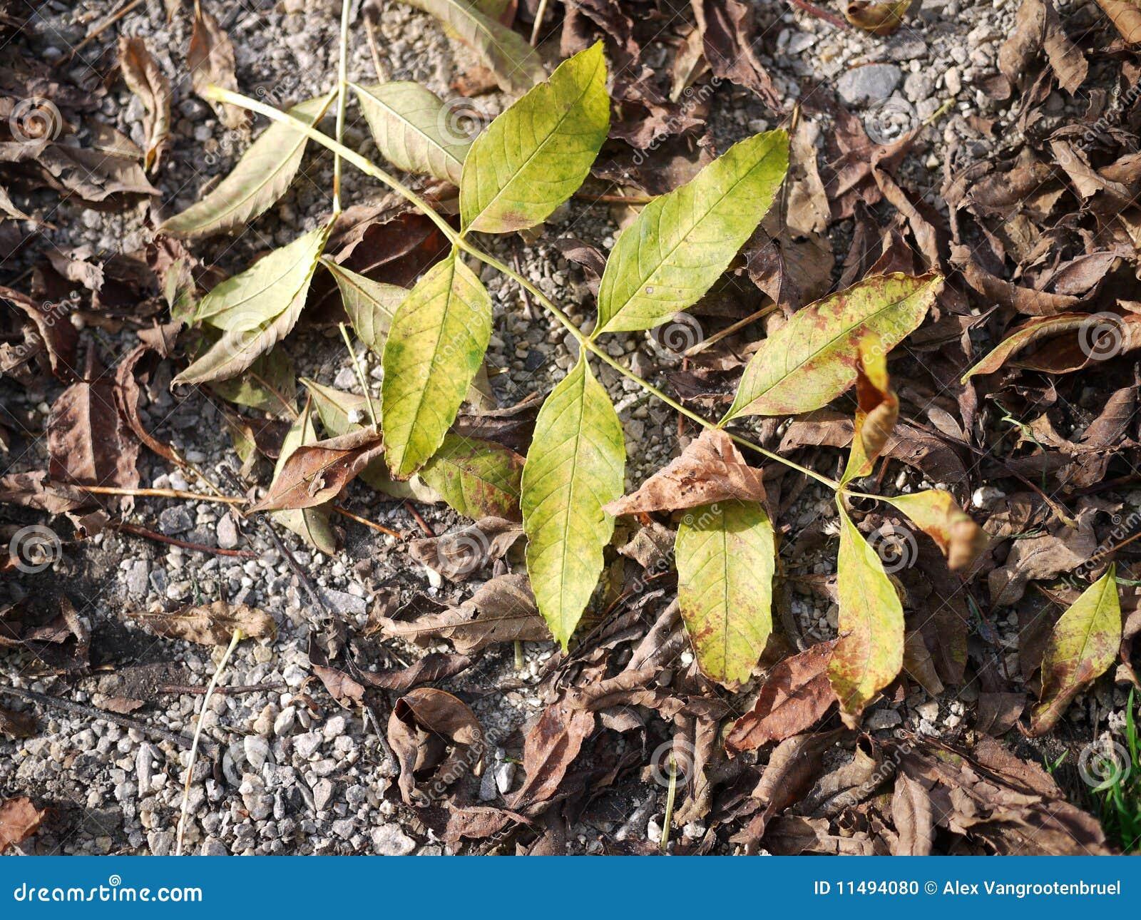 φύλλα πτώσης