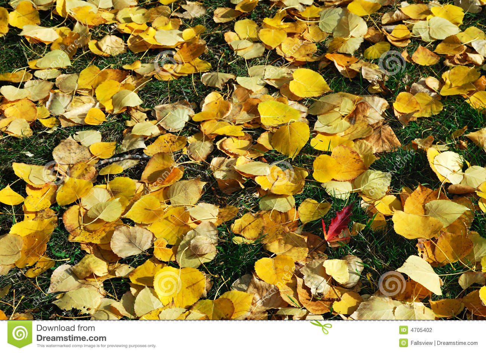 φύλλα χλόης φθινοπώρου