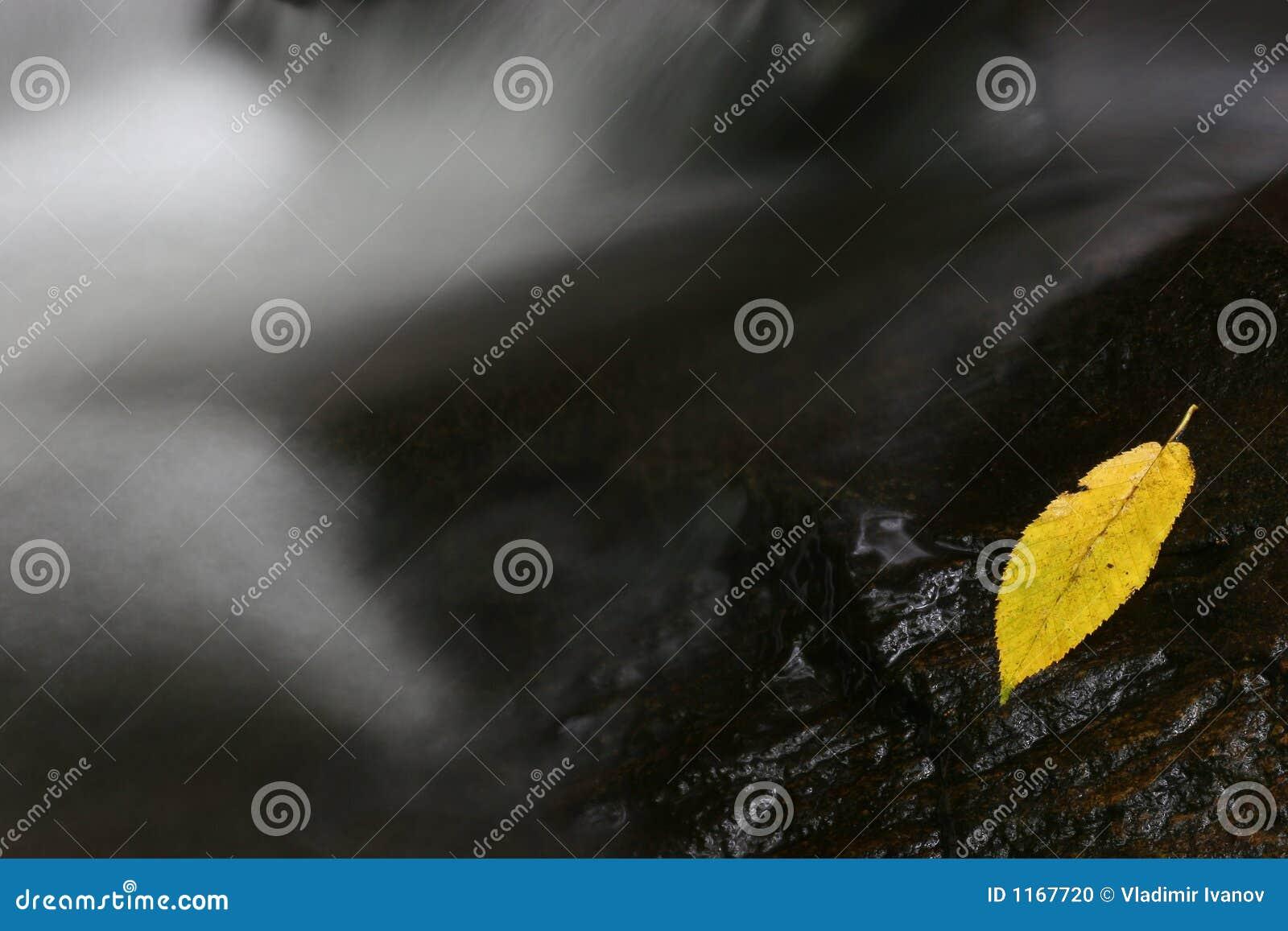 φύλλο κίτρινο