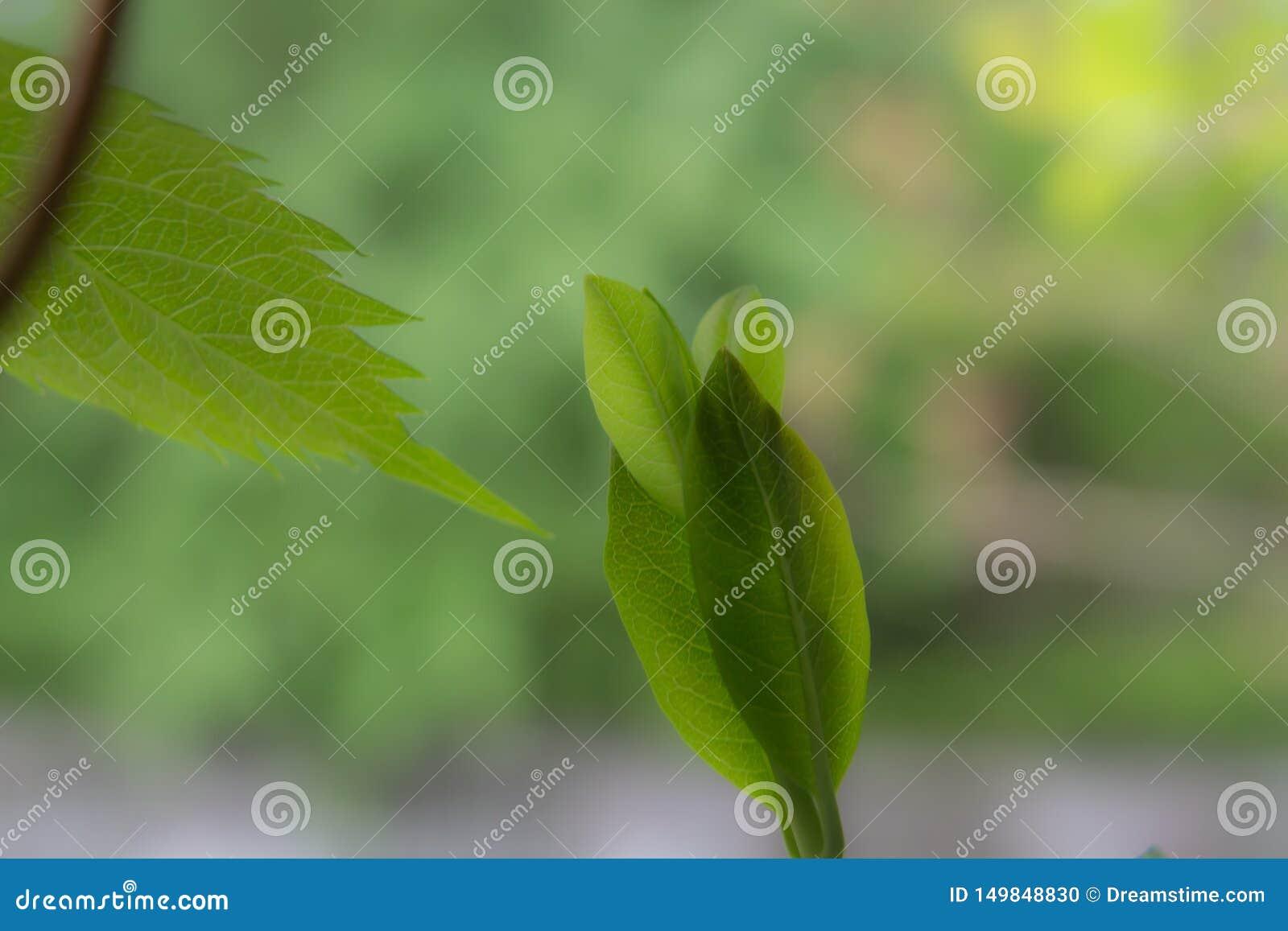 φύλλο, πρασινάδα, καλοκαίρι, άνοιξη, πράσινος, όμορφη, φύση, φυτό, νεολαίες, χρώμα, φύση, ελπίδα