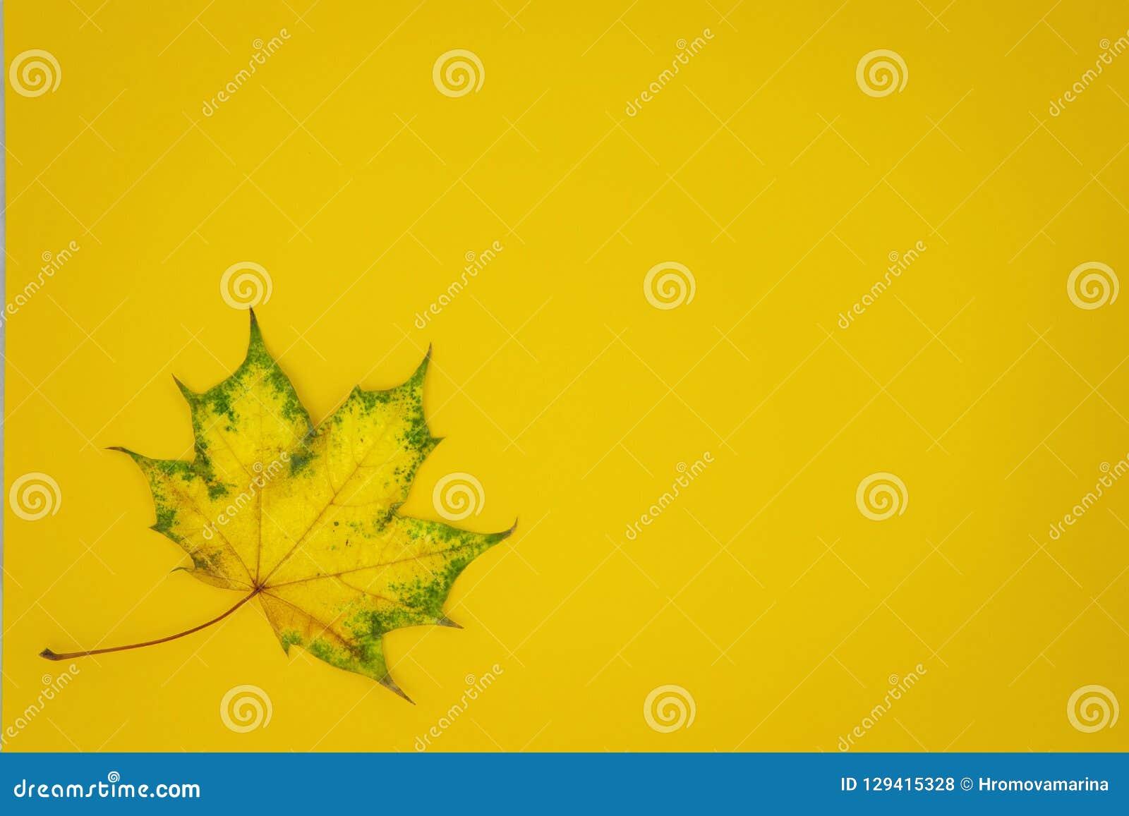 Φύλλο σφενδάμου στο κίτρινο υπόβαθρο