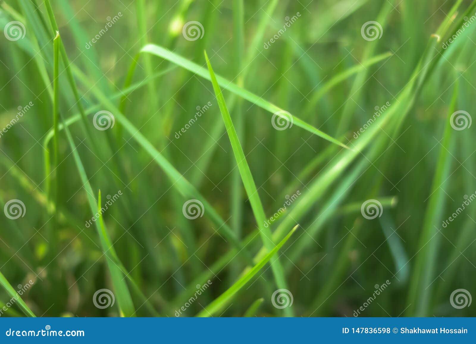 Φύλλο Grasss