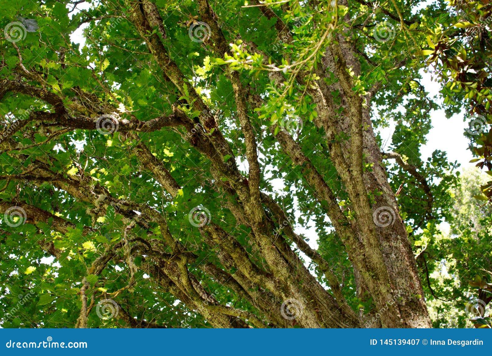 Πράσινο υπόβαθρο δέντρων Φύση, περιβάλλον, σχέδιο οικολογίας