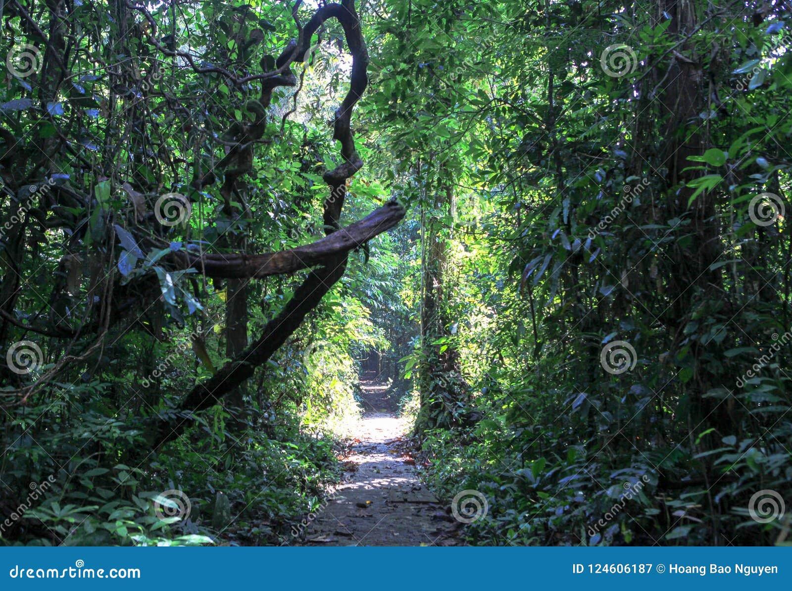 Φύση του εθνικού πάρκου Gunung Mulu Sarawak, Μαλαισία