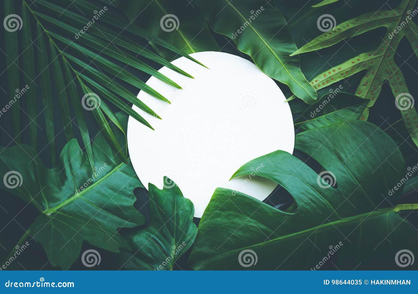 Φύλλα με το διαστημικό υπόβαθρο αντιγράφων Τροπικός βοτανικός