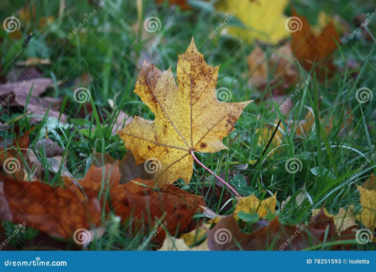 Φύλλα πτώσης στο έδαφος