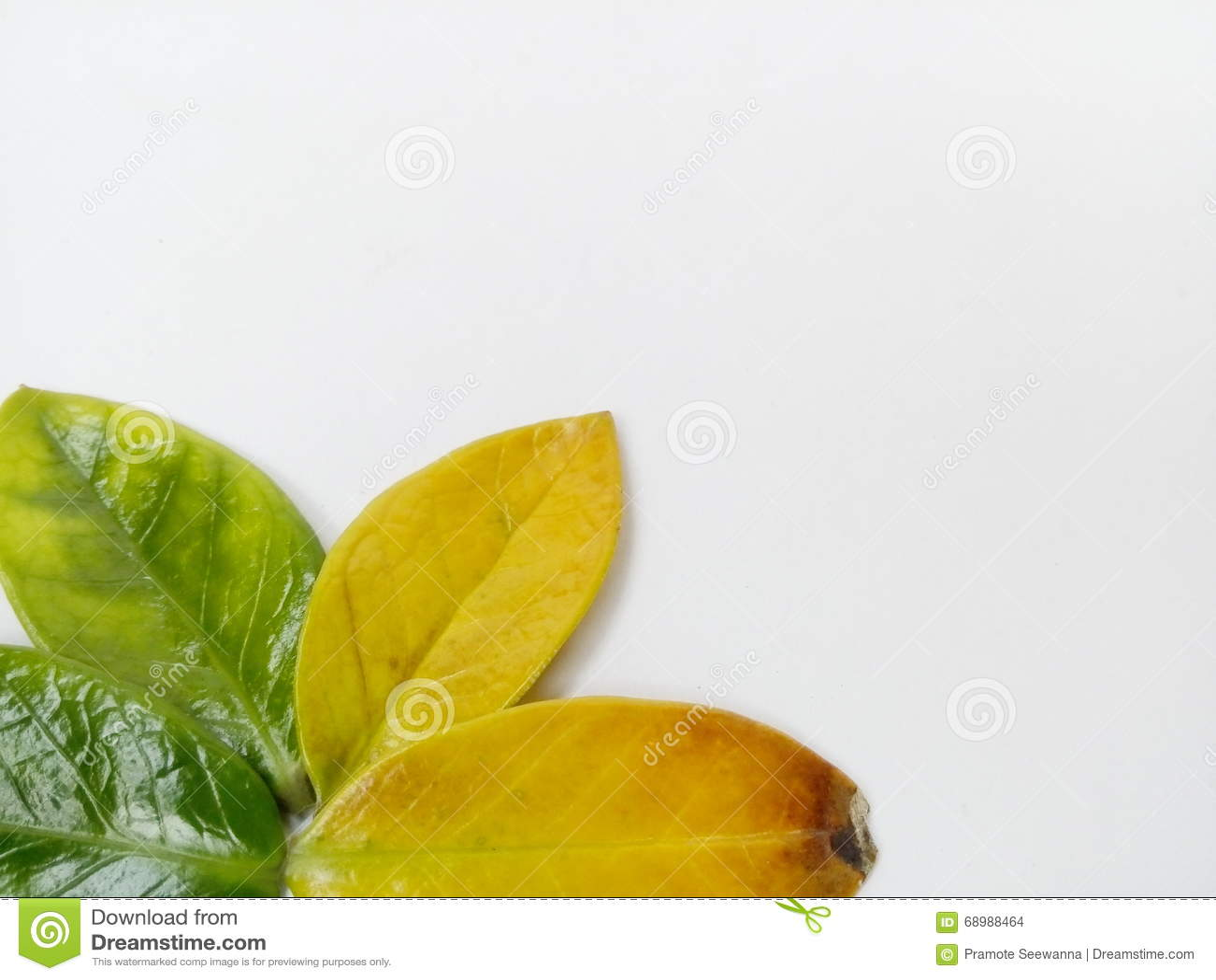 Φύλλα σε μια άσπρη ανασκόπηση