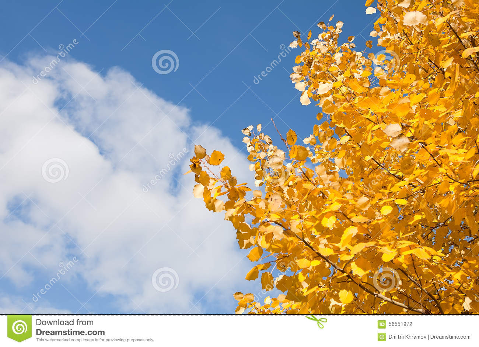Download Φύλλα φθινοπώρου ενάντια στο μπλε ουρανό Στοκ Εικόνες - εικόνα από χρωματισμένος, βακκινίων: 56551972