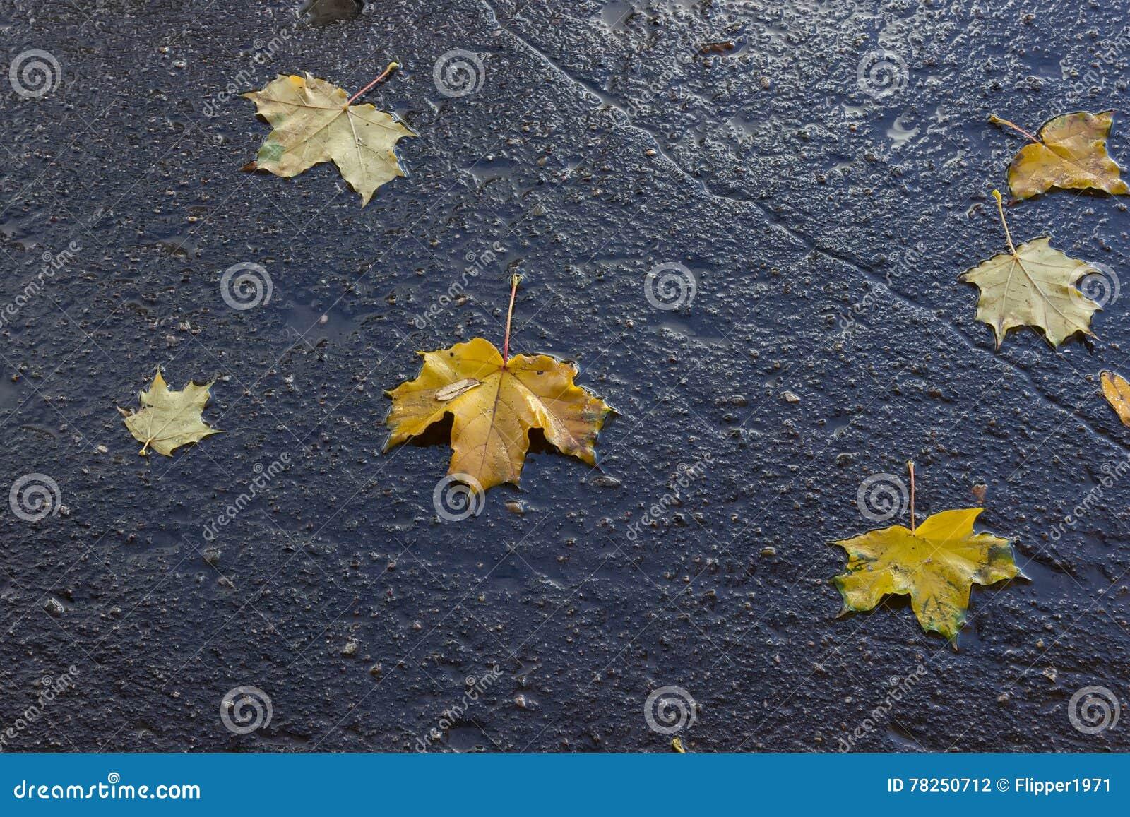 Φύλλα φθινοπώρου στην υγρή άσφαλτο