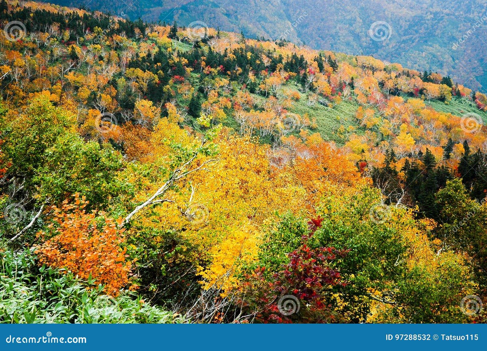 Φύλλα φθινοπώρου στο πέρασμα Shiretoko, Hokkaido, Ιαπωνία