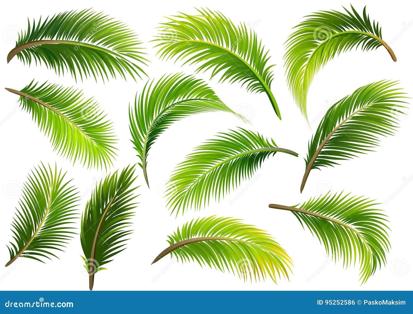 Φύλλα φοινικών διάνυσμα