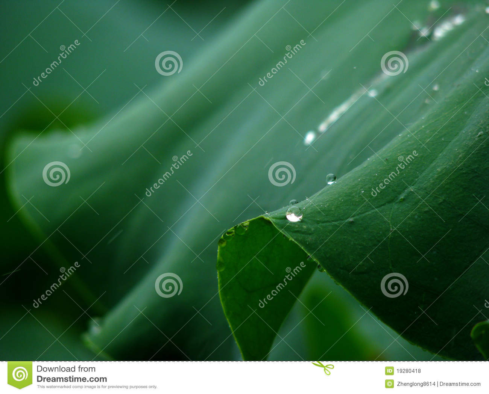 Φύλλο και σταλαγματιά Lotus