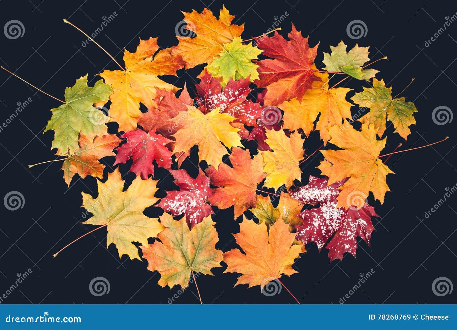 Φύλλο φθινοπώρου στη μαύρη ανασκόπηση