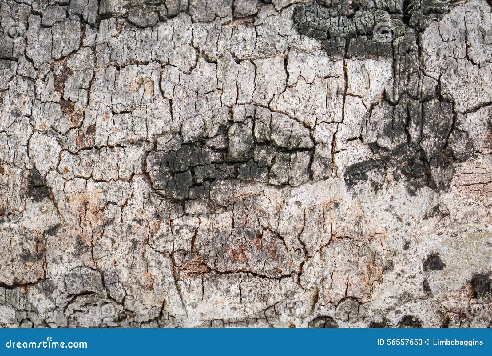 Download Φλοιός της σύστασης δέντρων Στοκ Εικόνα - εικόνα από ανασκόπησης, ξυλεία: 56557653