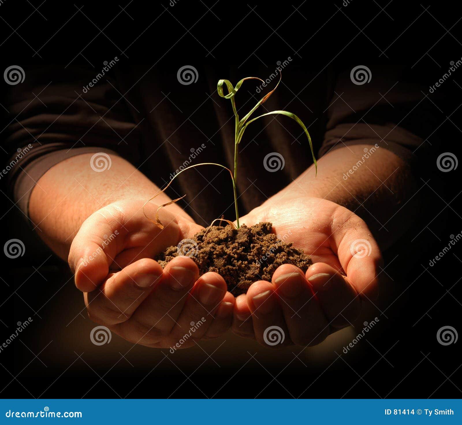 χέρια που κρατούν το σπορόφυτο