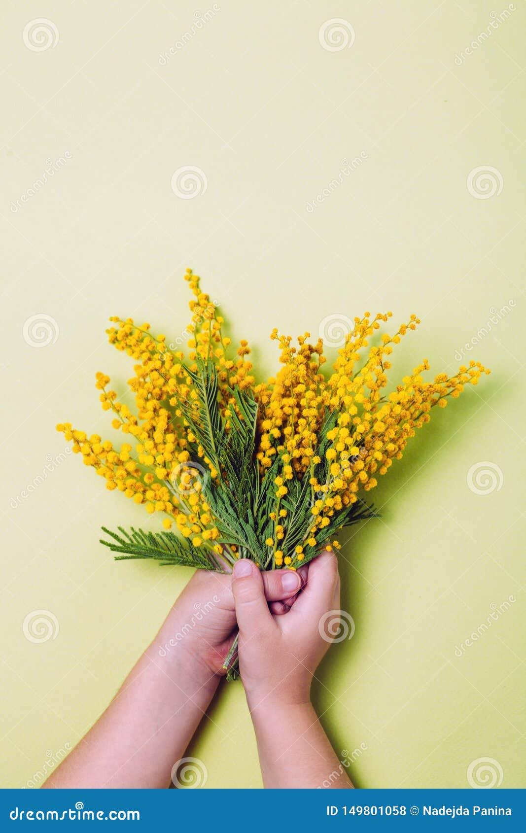 Χέρι παιδιών που κρατά τα κίτρινα λουλούδια mimosa στο κίτρινο υπόβαθρο
