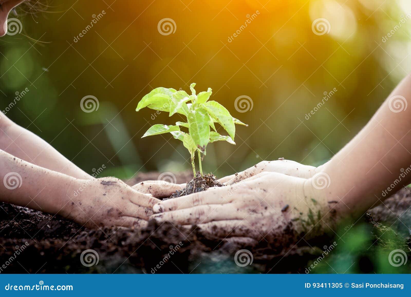Χέρι παιδιών και γονέων που φυτεύει το νέο δέντρο στο μαύρο χώμα