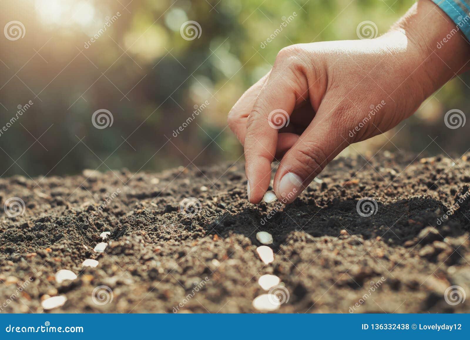 χέρι που φυτεύει το σπόρο κολοκύθας στο φυτικό κήπο και το φως θερμούς Γεωργία