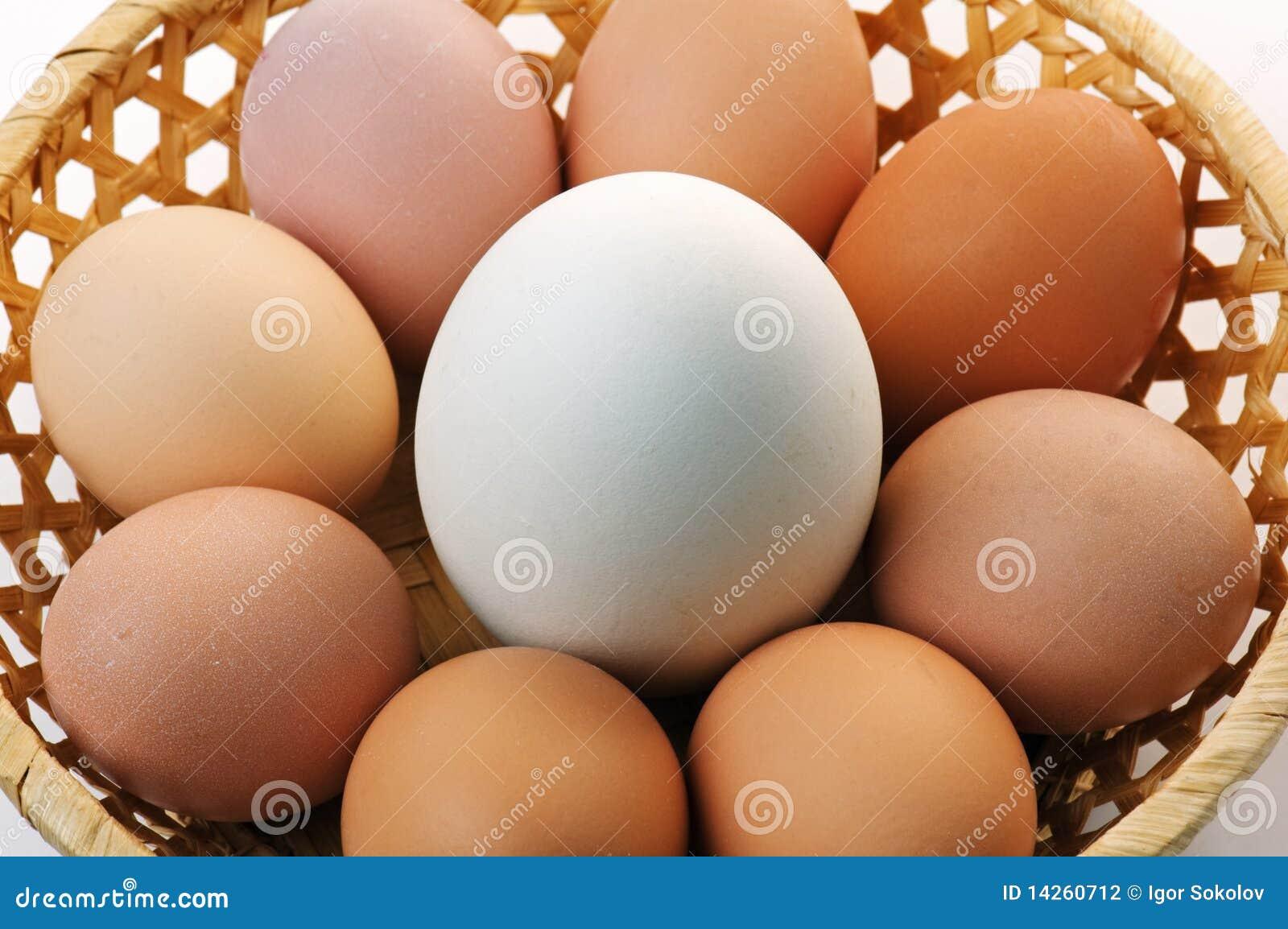 χήνα αυγών
