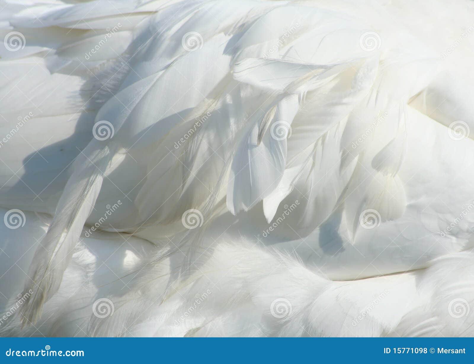 χήνα φτερών