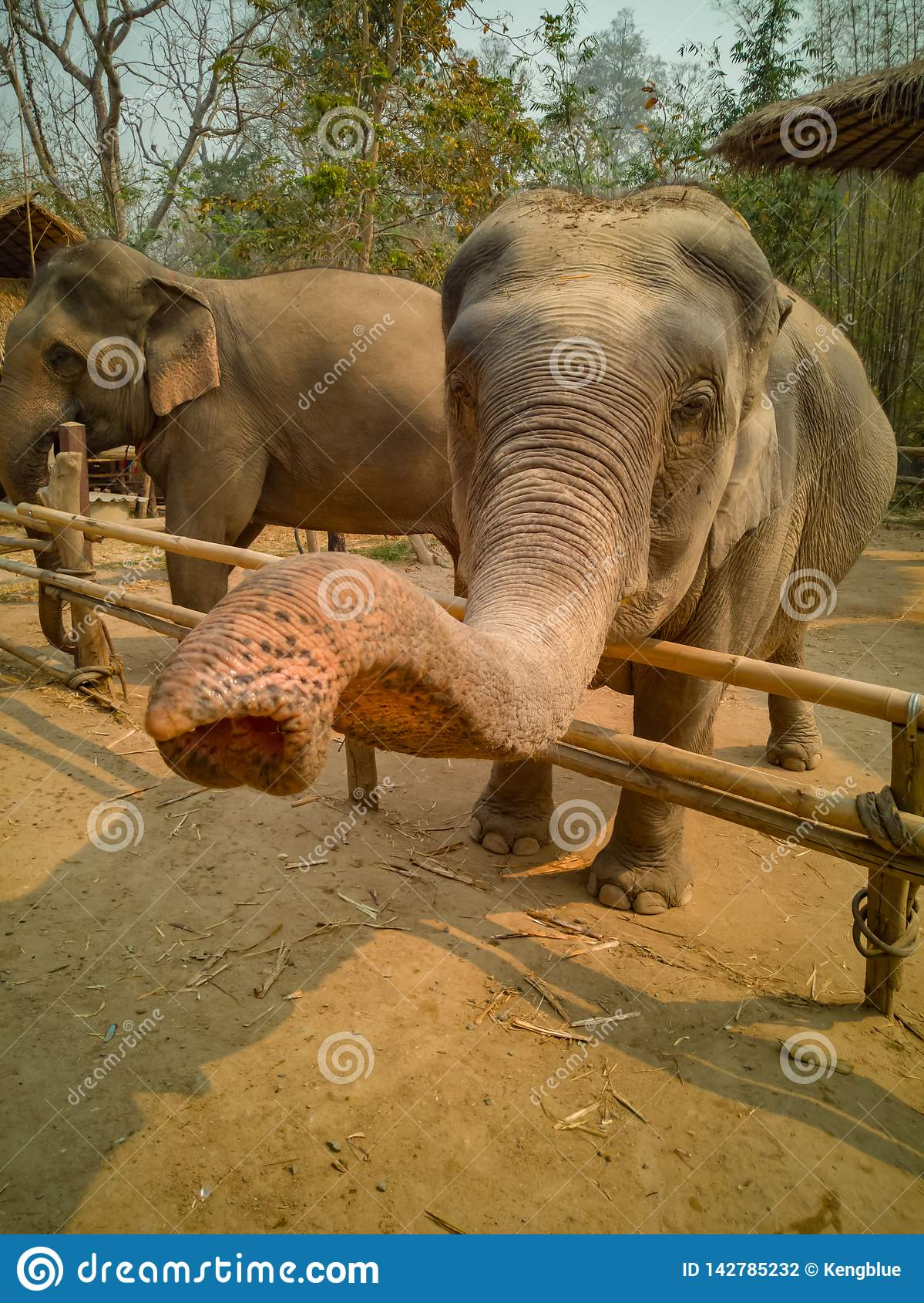 Χαιρετισμός ελεφάντων