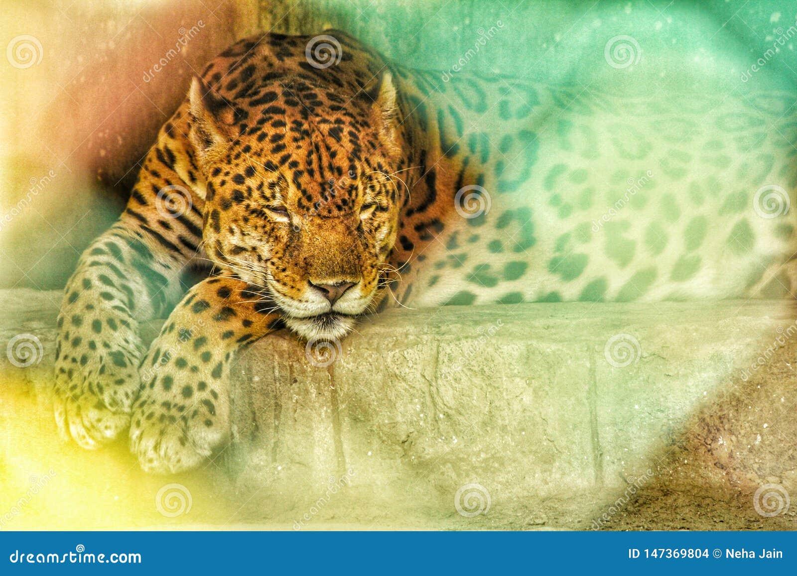 Χαλάρωση λεοπαρδάλεων στο ζωολογικό κήπο