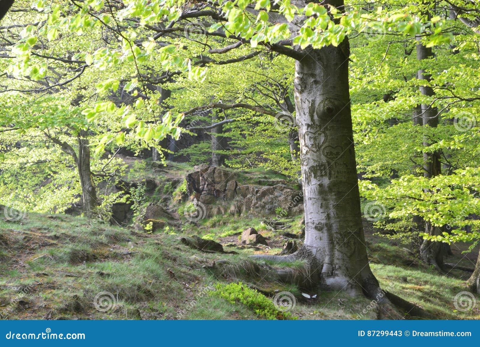 χαρασμένο δέντρο