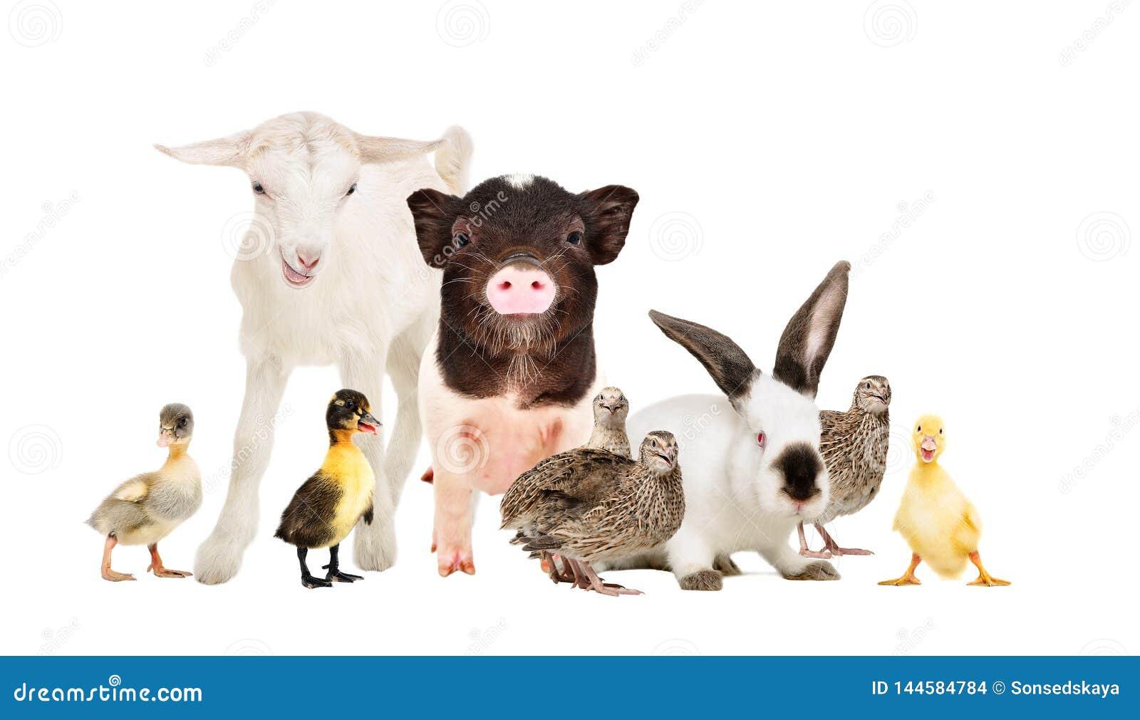 Χαριτωμένα ζώα αγροκτημάτων