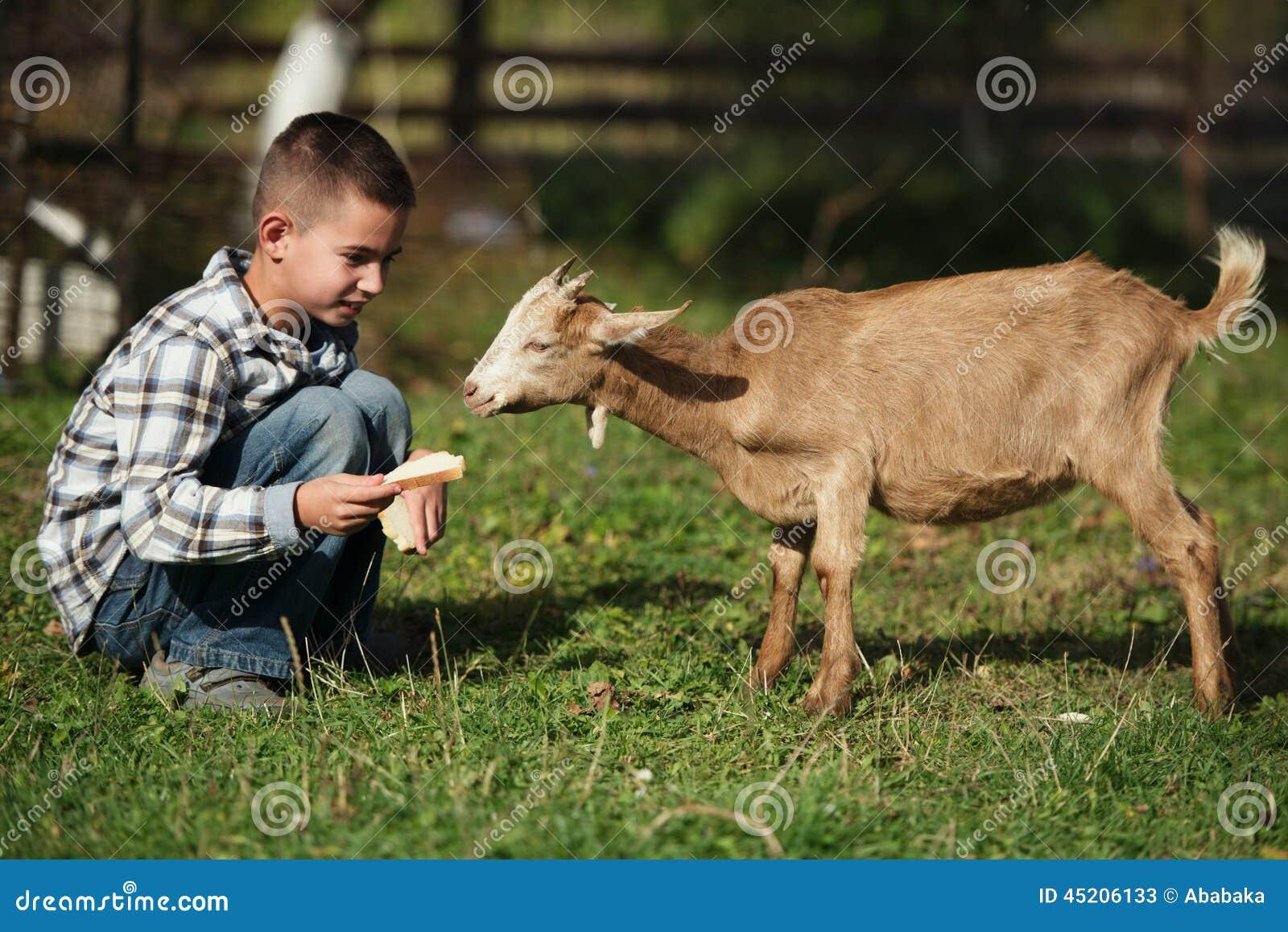 Χαριτωμένη ταΐζοντας αίγα μικρών παιδιών