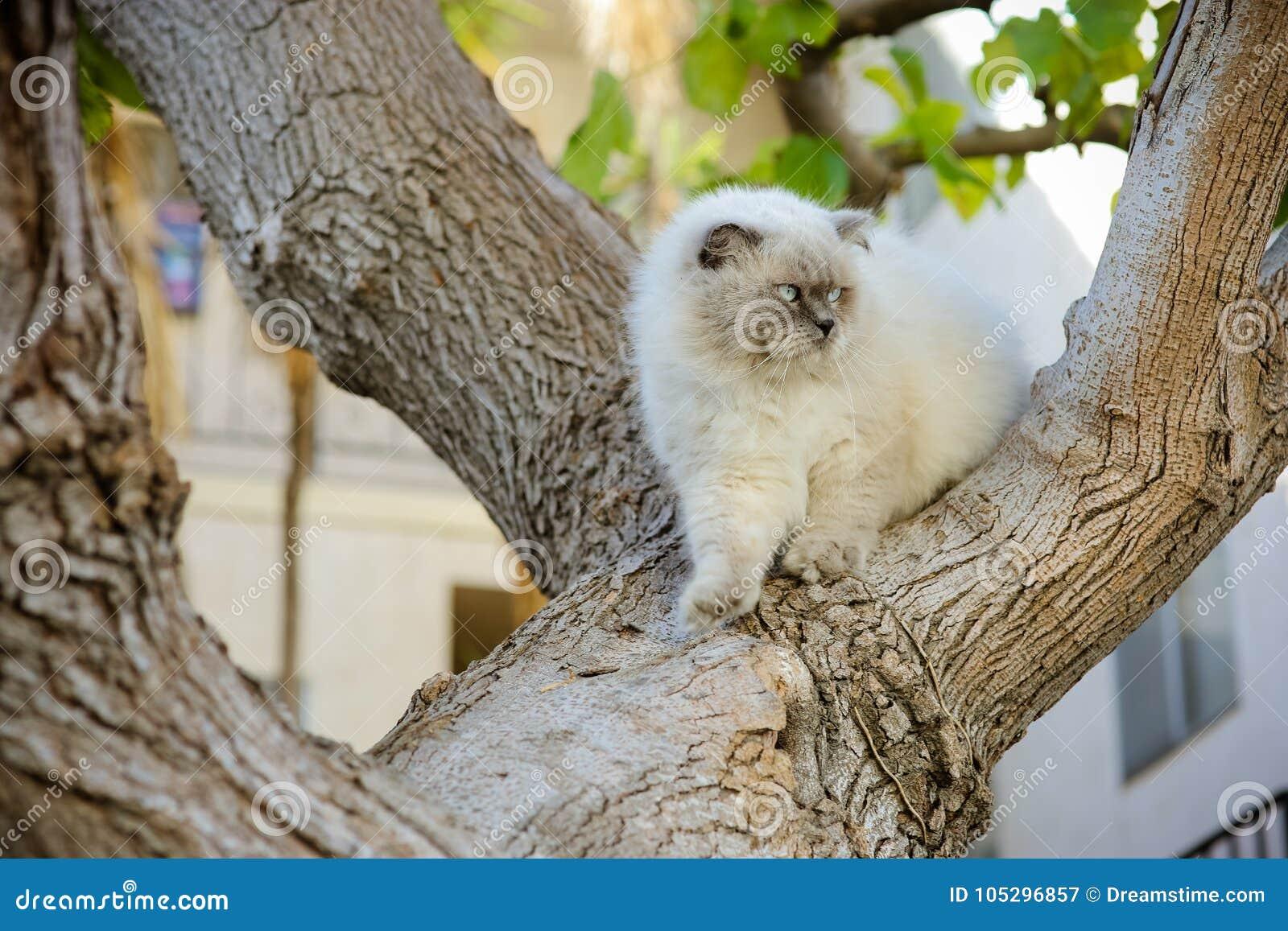Χαριτωμένη όμορφη όμορφη γάτα που περπατά στο δέντρο Υπαίθριο εγχώριο κατοικίδιο ζώο Μ