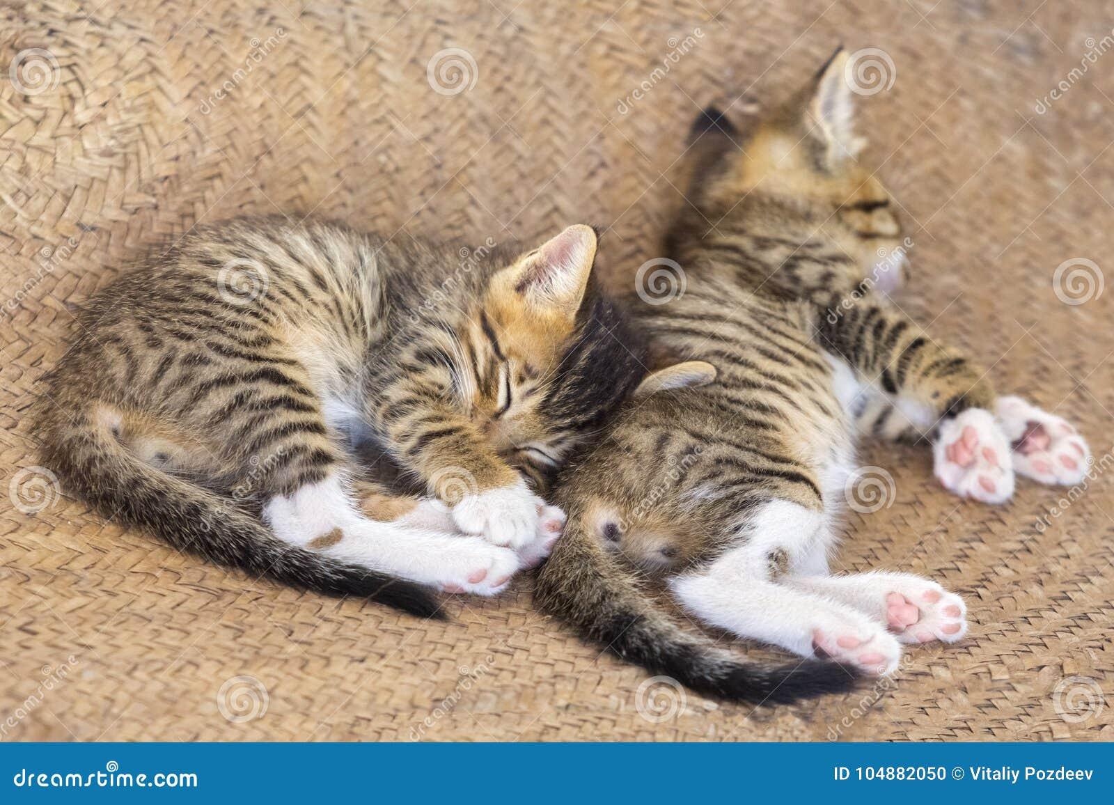 Χαριτωμένο μικρό γατάκι δύο