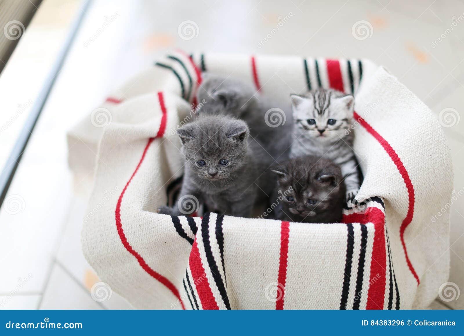 Χαριτωμένο πρόσωπο, πρόσφατα γεννημένα γατάκια