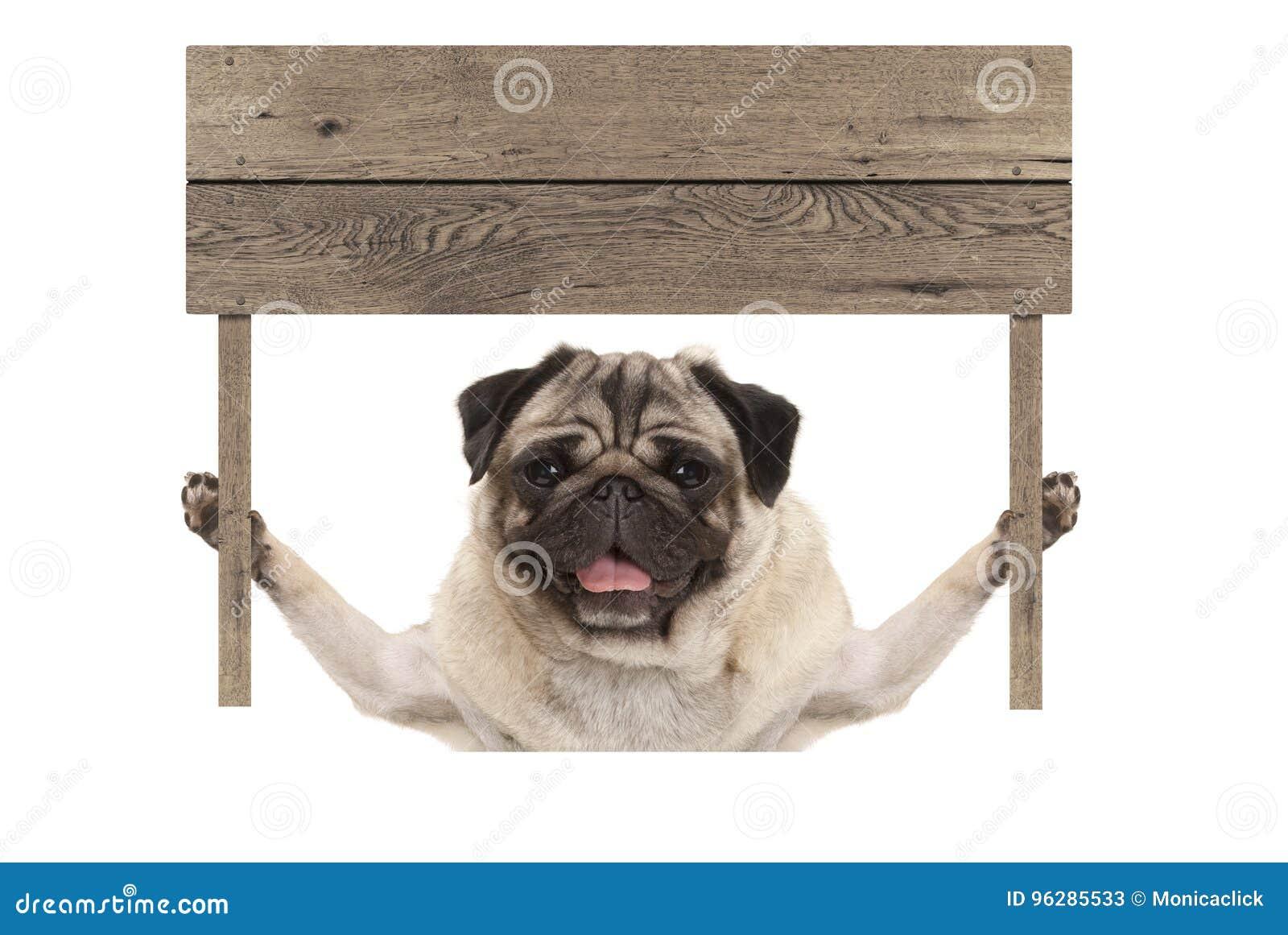 Χαριτωμένο σκυλί κουταβιών μαλαγμένου πηλού χαμόγελου που κρατά ψηλά το κενό ξύλινο σημάδι πινάκων