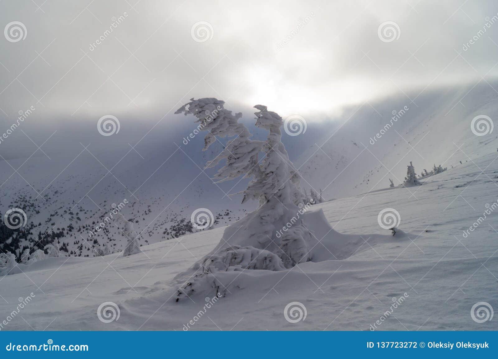 Χειμερινές περιπέτειες Φάντασμα Carpathians χιονιού Ουκρανία