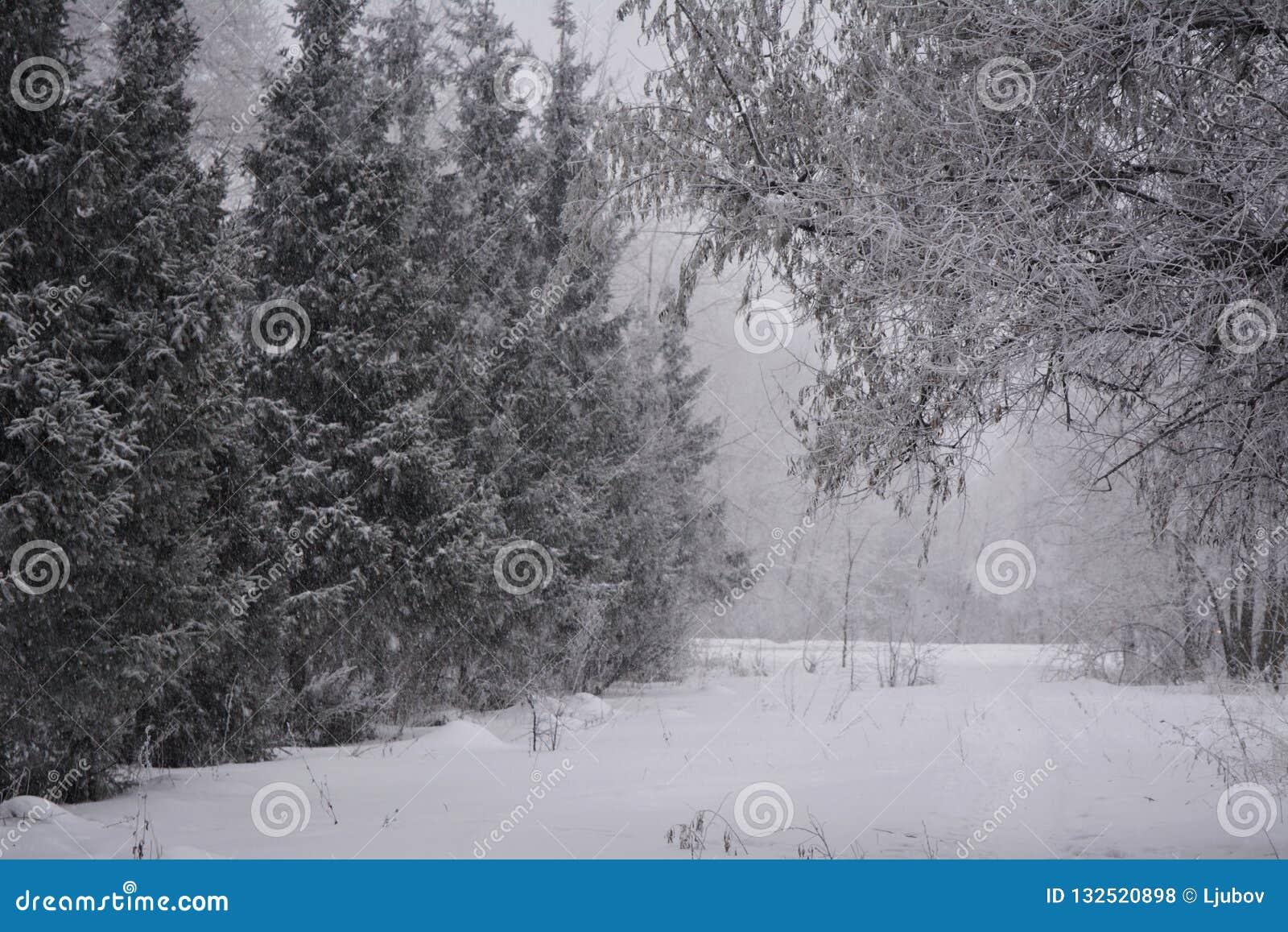 Χειμερινή χώρα των θαυμάτων σε μικτές δασικές χιονοπτώσεις στη νεφελώδη ημέρα