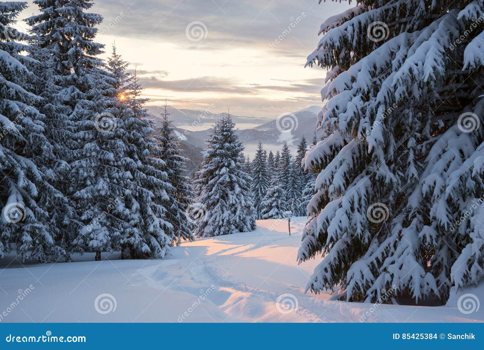 Χειμερινό ηλιοβασίλεμα πέρα από τη δασική κοιλάδα βουνών