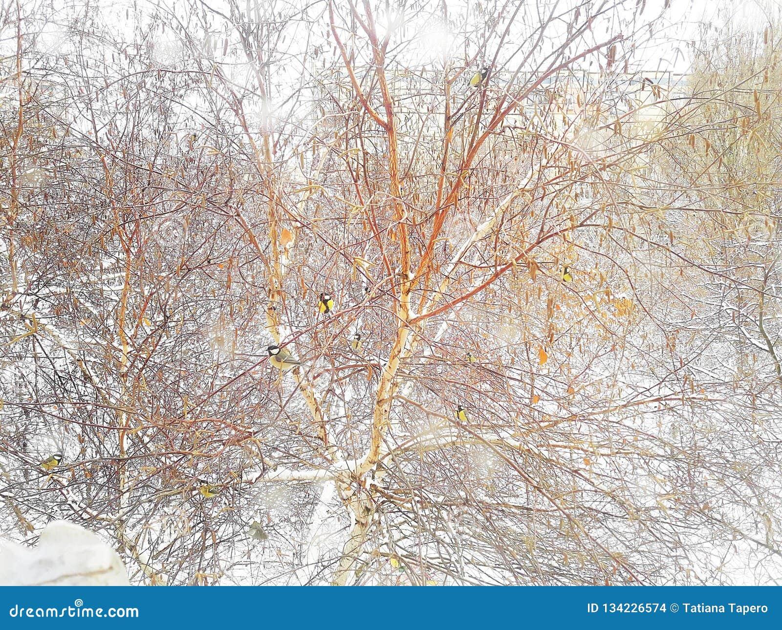 Χειμερινό τοπίο έξω από το παράθυρο Μικρά titmouses σε ένα δέντρο