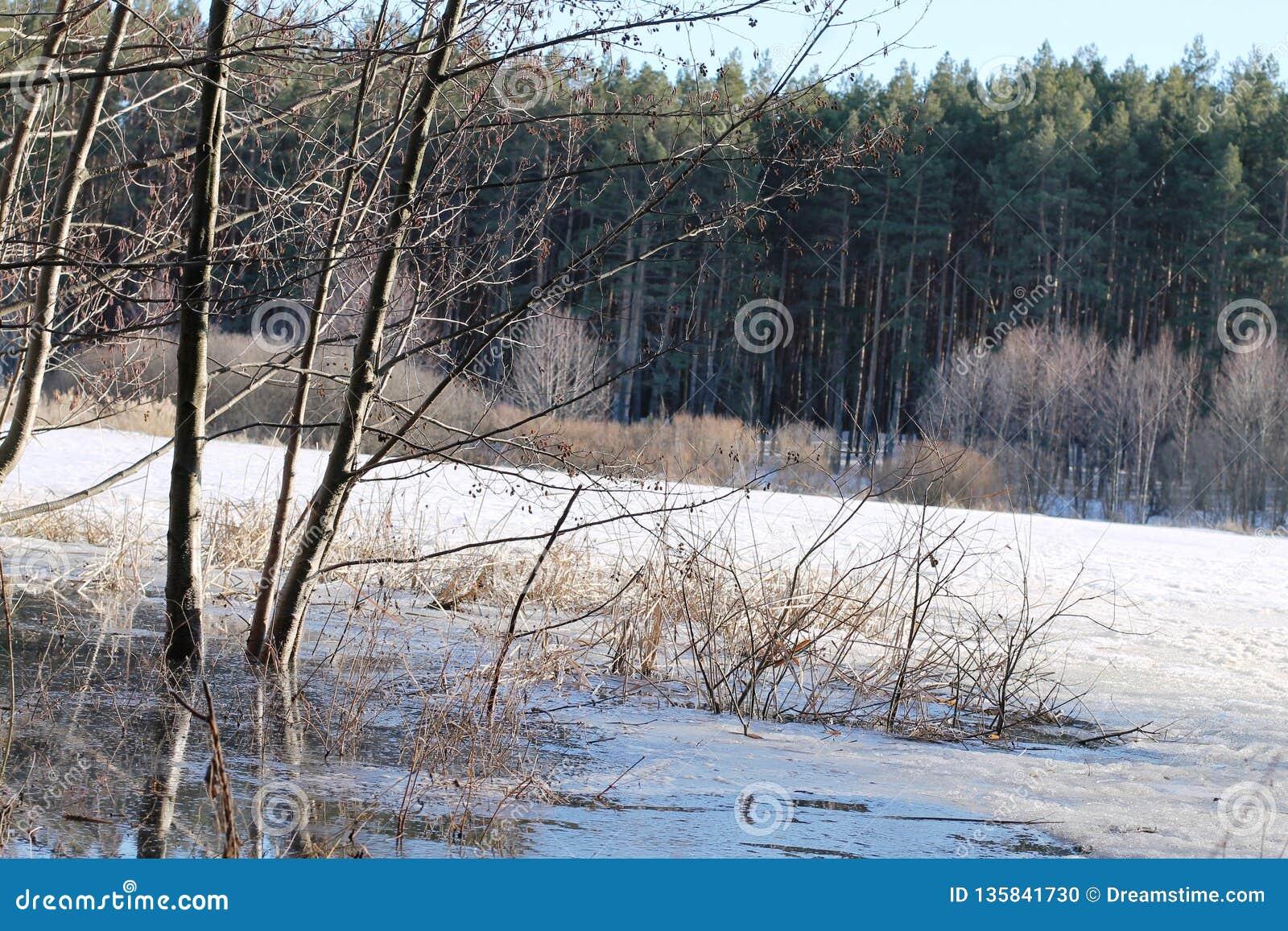 Χειμερινό τοπίο με τον ποταμό και δέντρα το χειμώνα