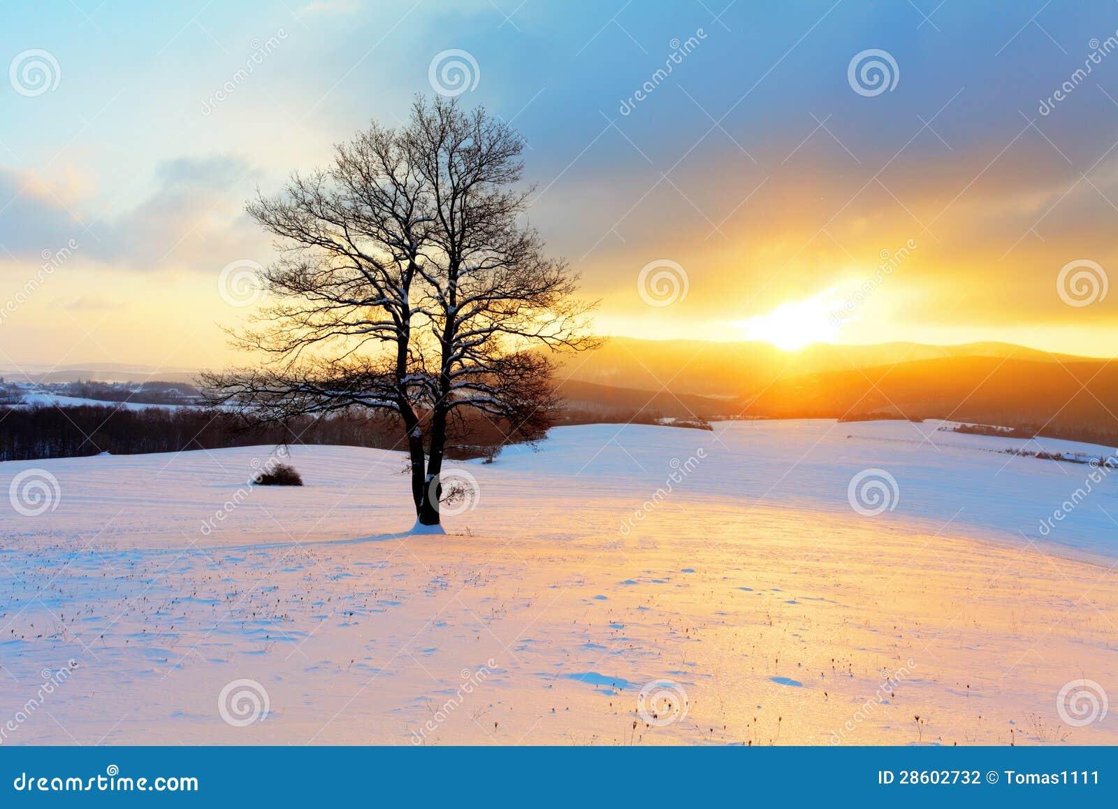 Χειμερινό τοπίο στη φύση χιονιού με τον ήλιο και το δέντρο