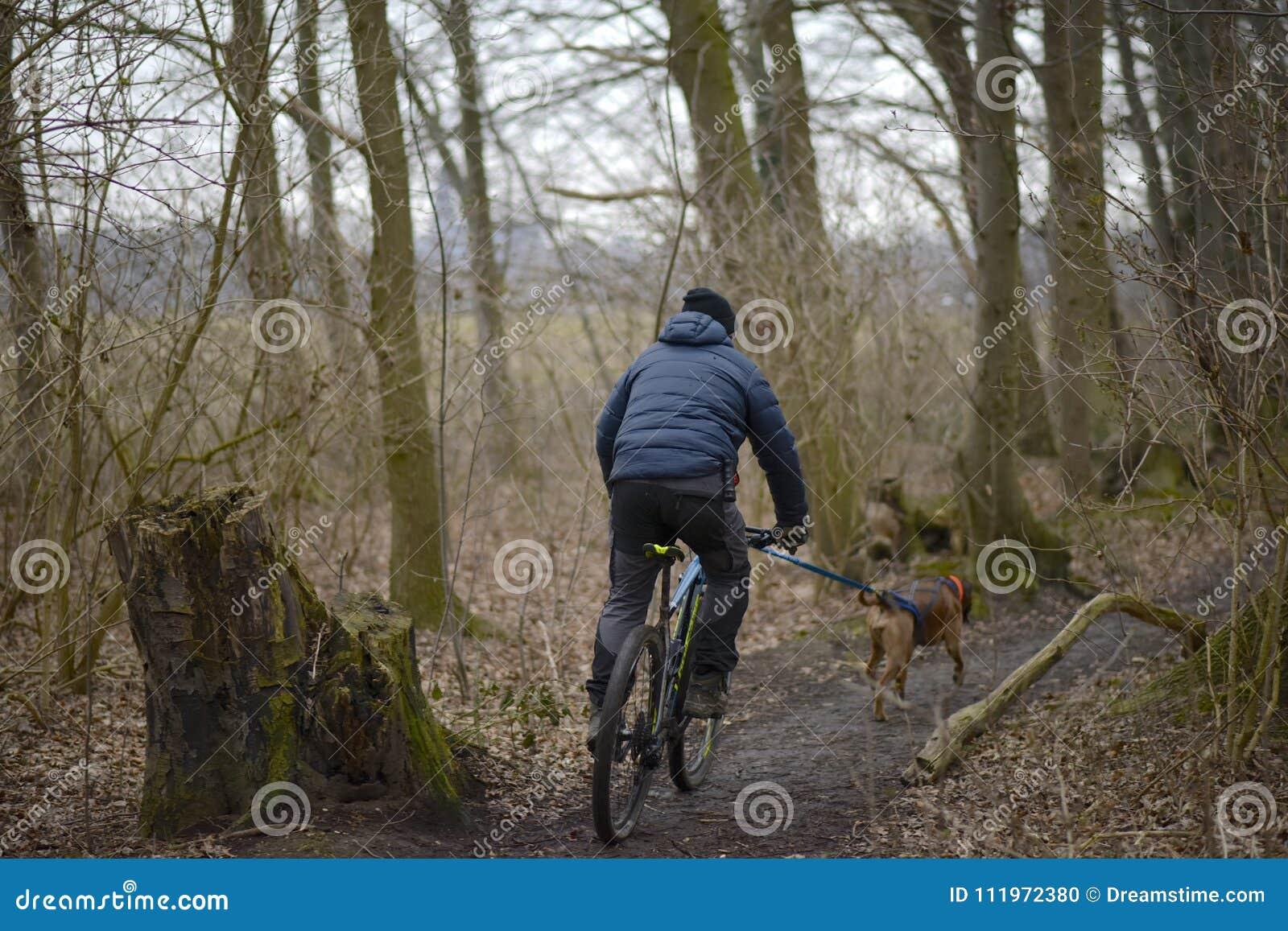Χειμώνας ένα άτομο οδηγά ένα ποδήλατο στα ξύλα με ένα σκυλί