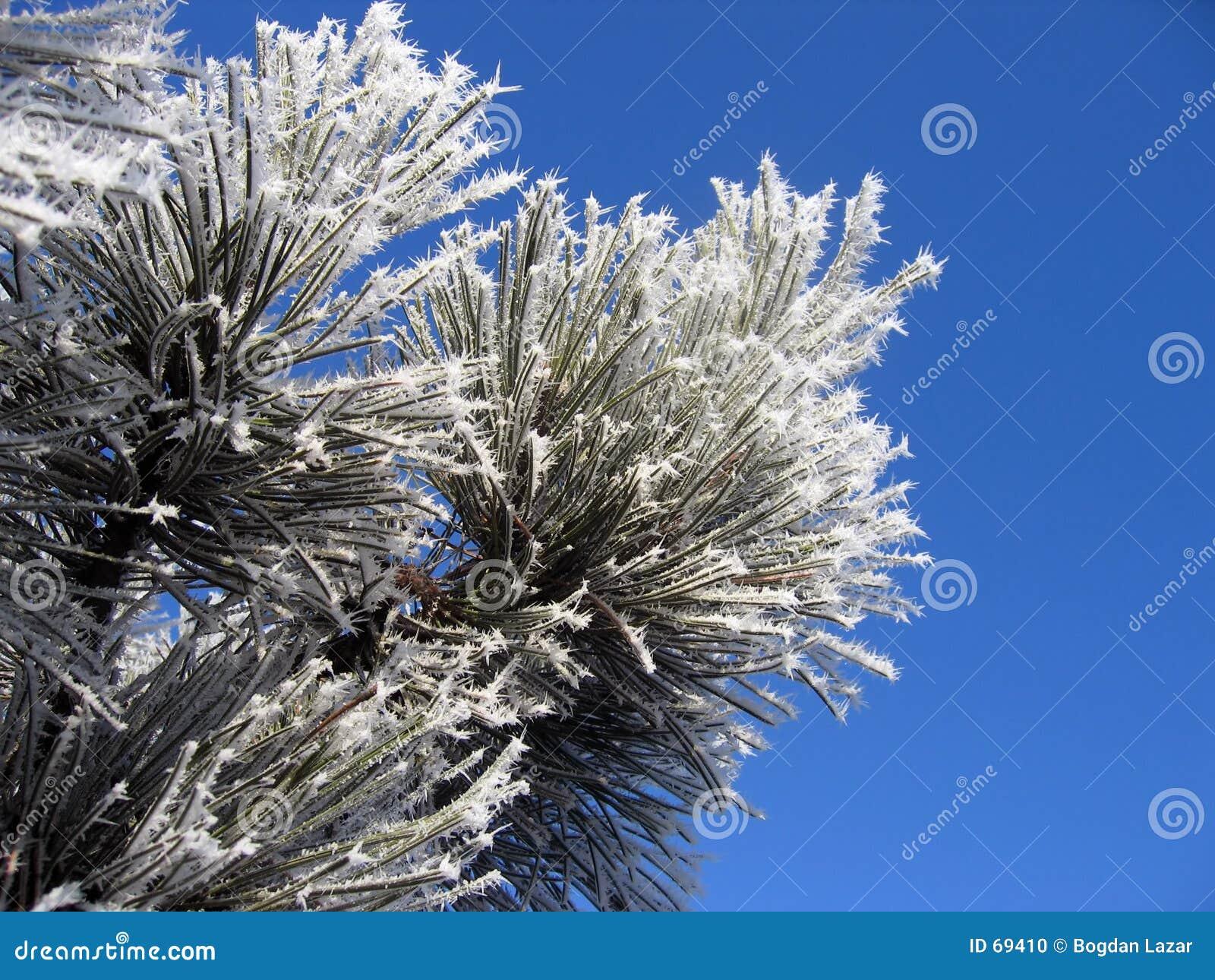 χειμώνας λουλουδιών