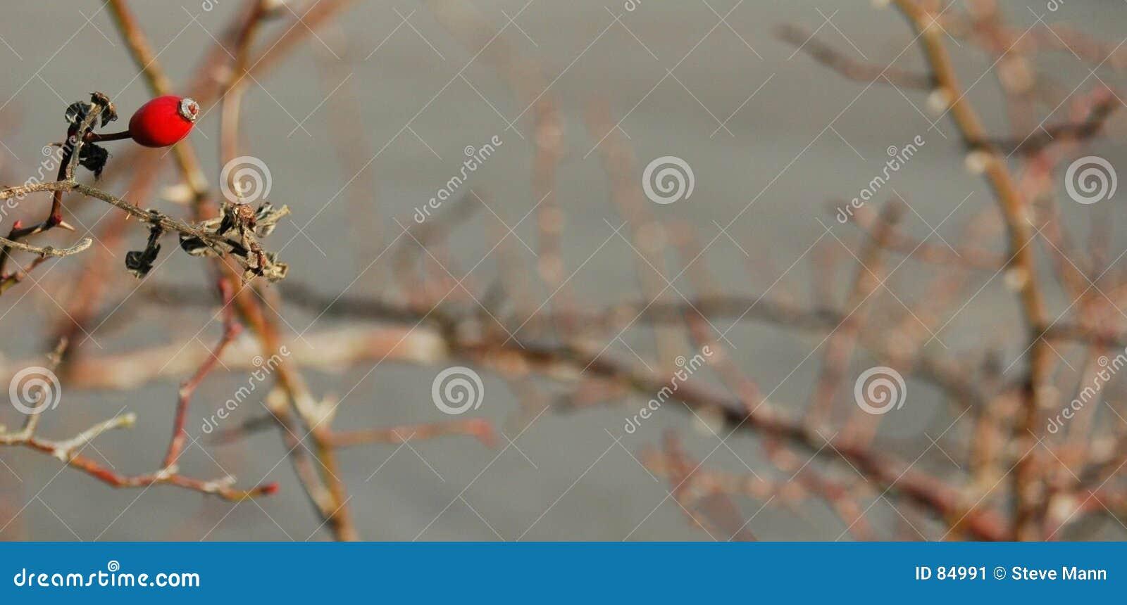 χειμώνας μούρων