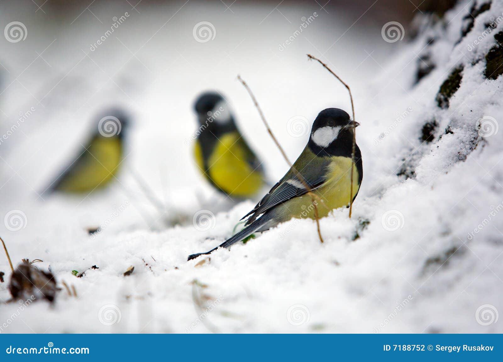 χειμώνας ομάδας τρία που&lambda