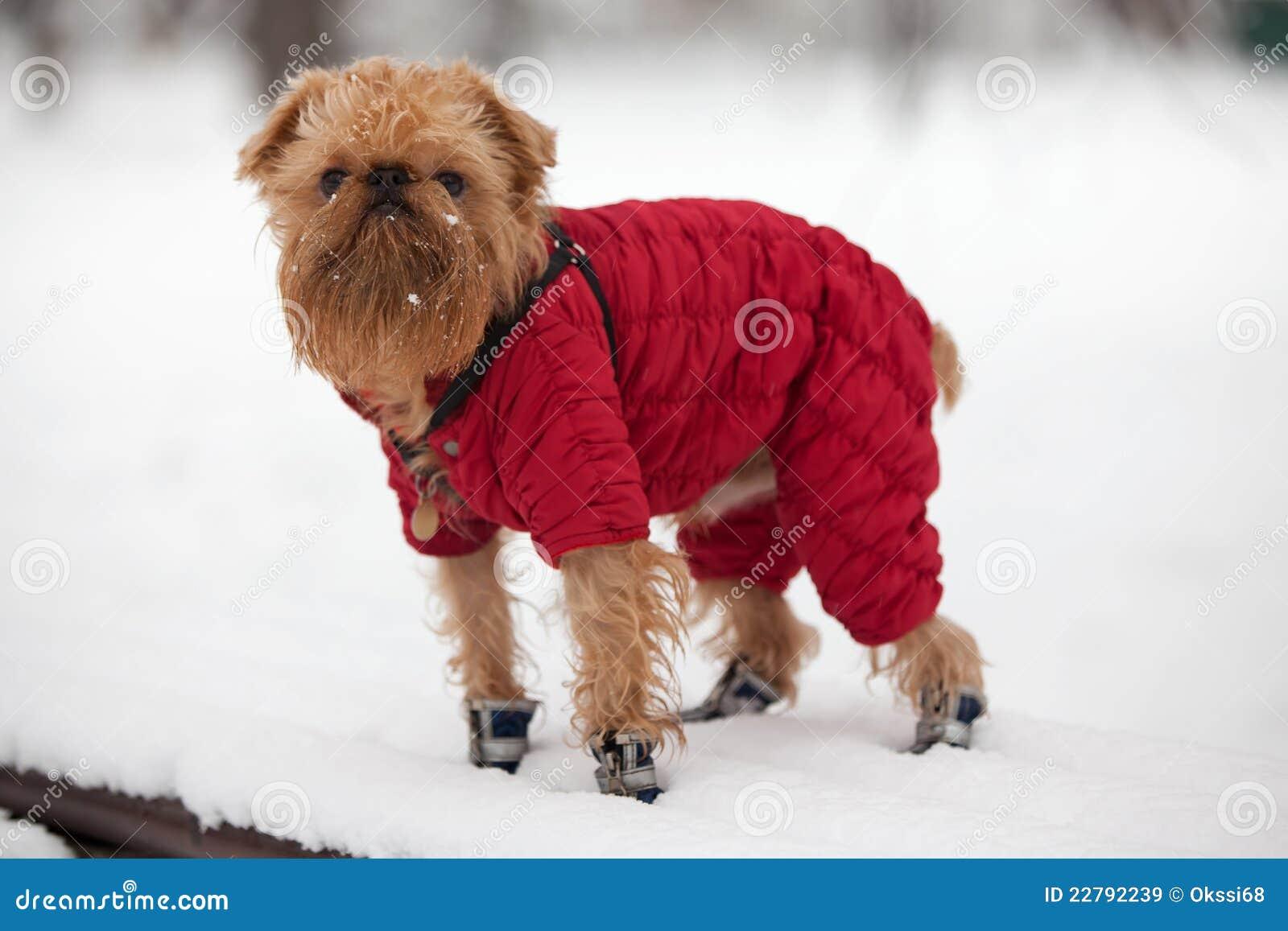 χειμώνας περιπάτων σκυλιών