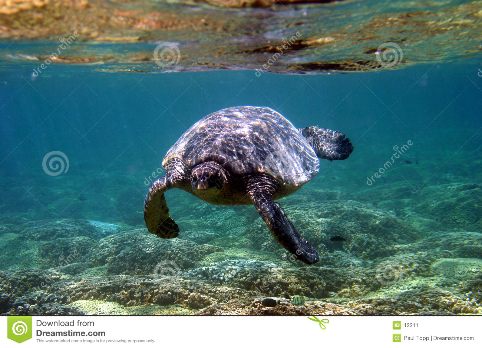 χελώνα θάλασσας υποβρύχ&io