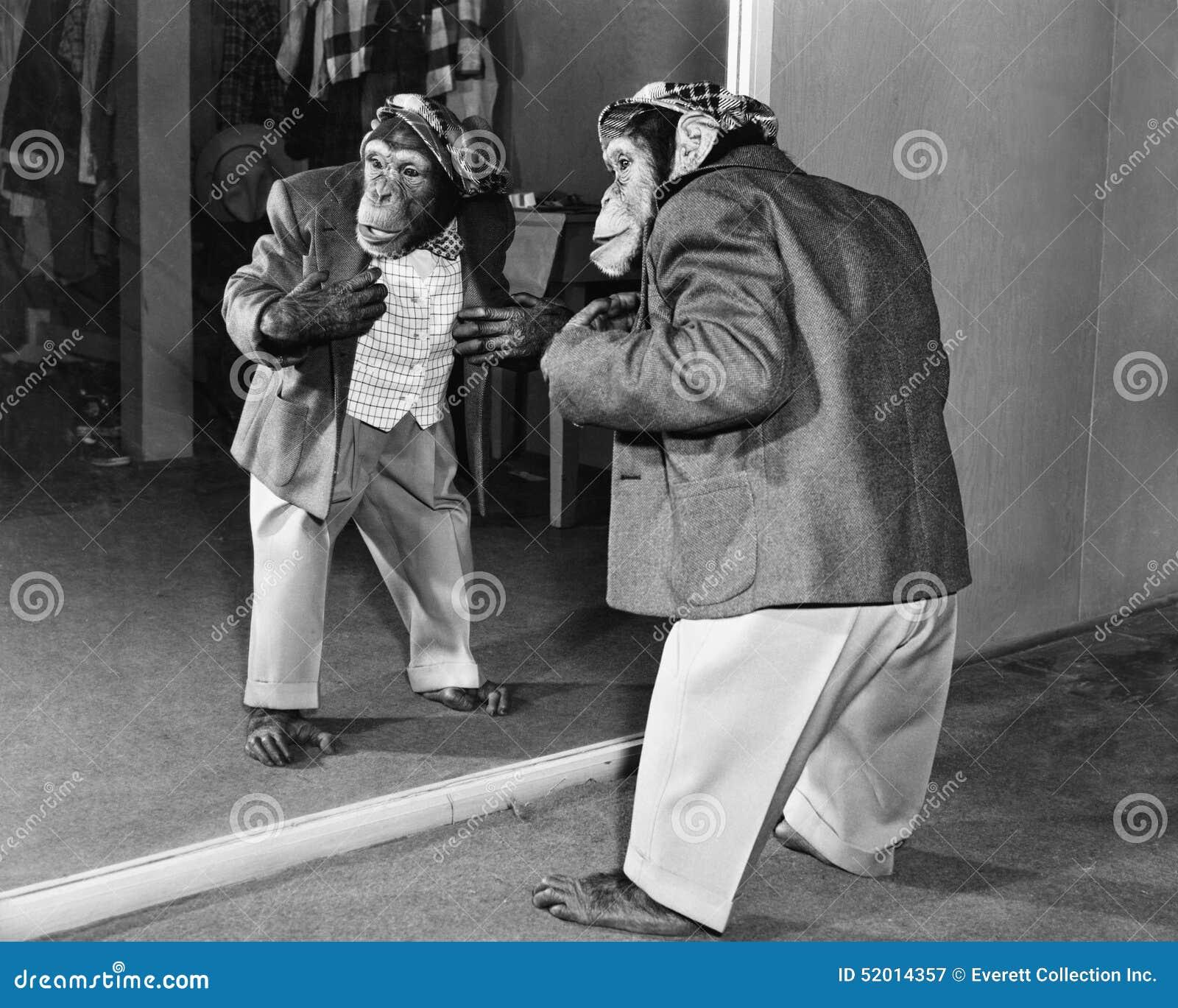 Χιμπατζής σε ένα σακάκι και παντελόνι μπροστά από έναν καθρέφτη (όλα τα πρόσωπα που απεικονίζονται δεν ζουν περισσότερο και κανέν