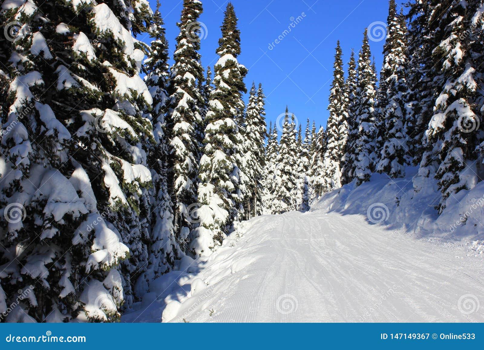 Χιονώδες δάσος το χειμώνα μια ηλιόλουστη ημέρα